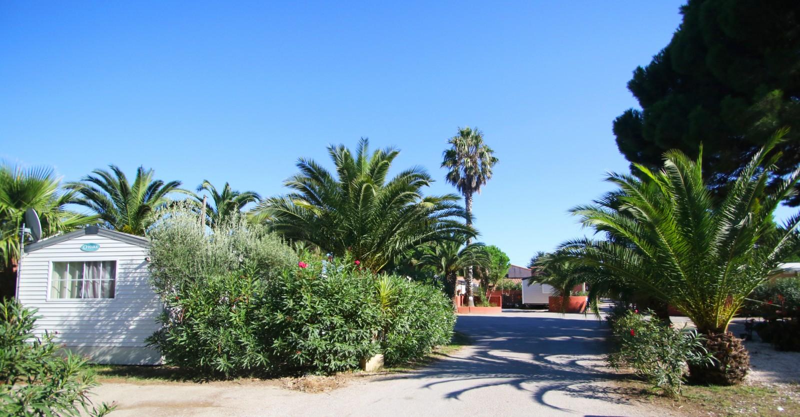 végétation du camping del mar
