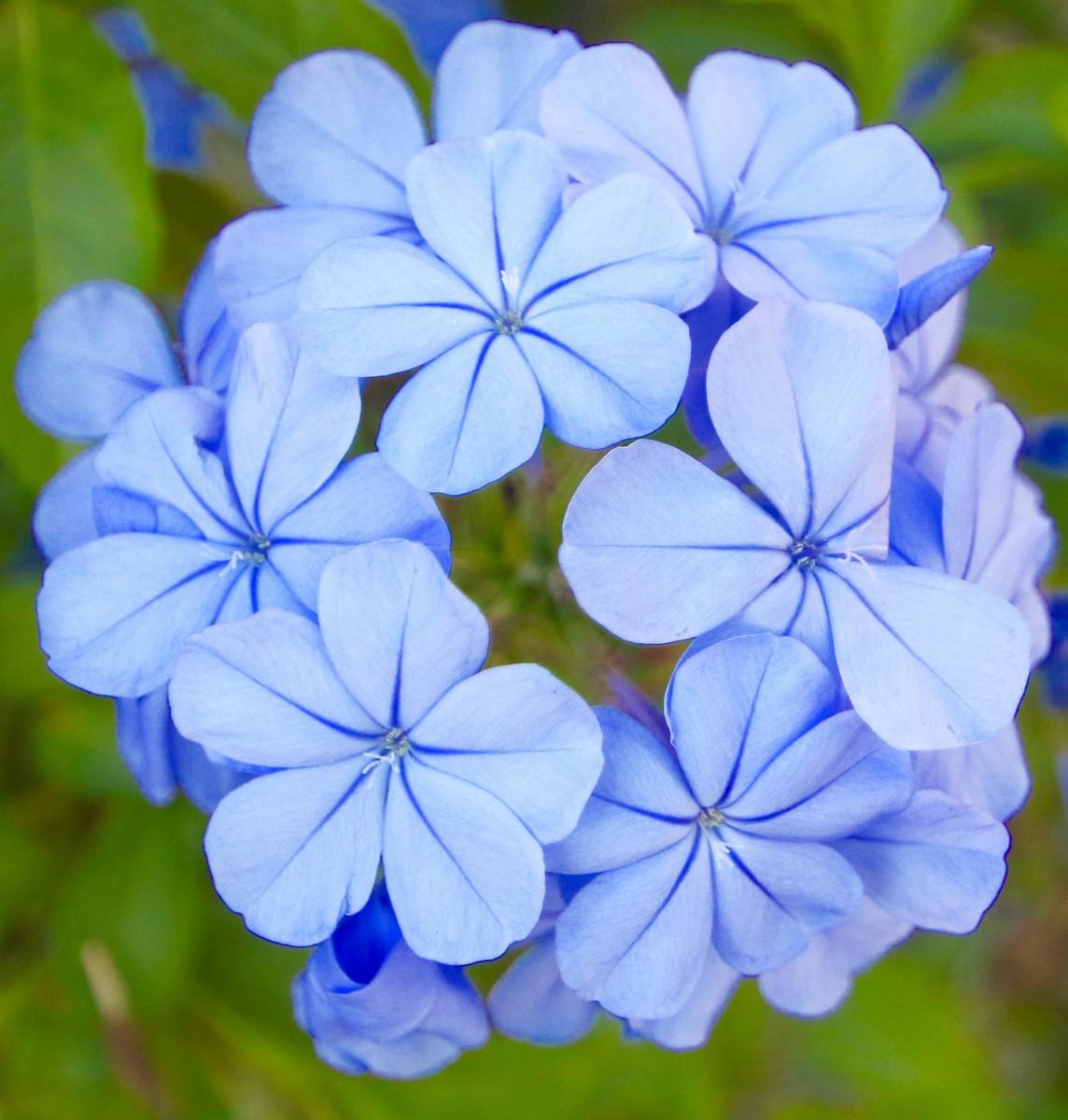 fleurs du camping del mar