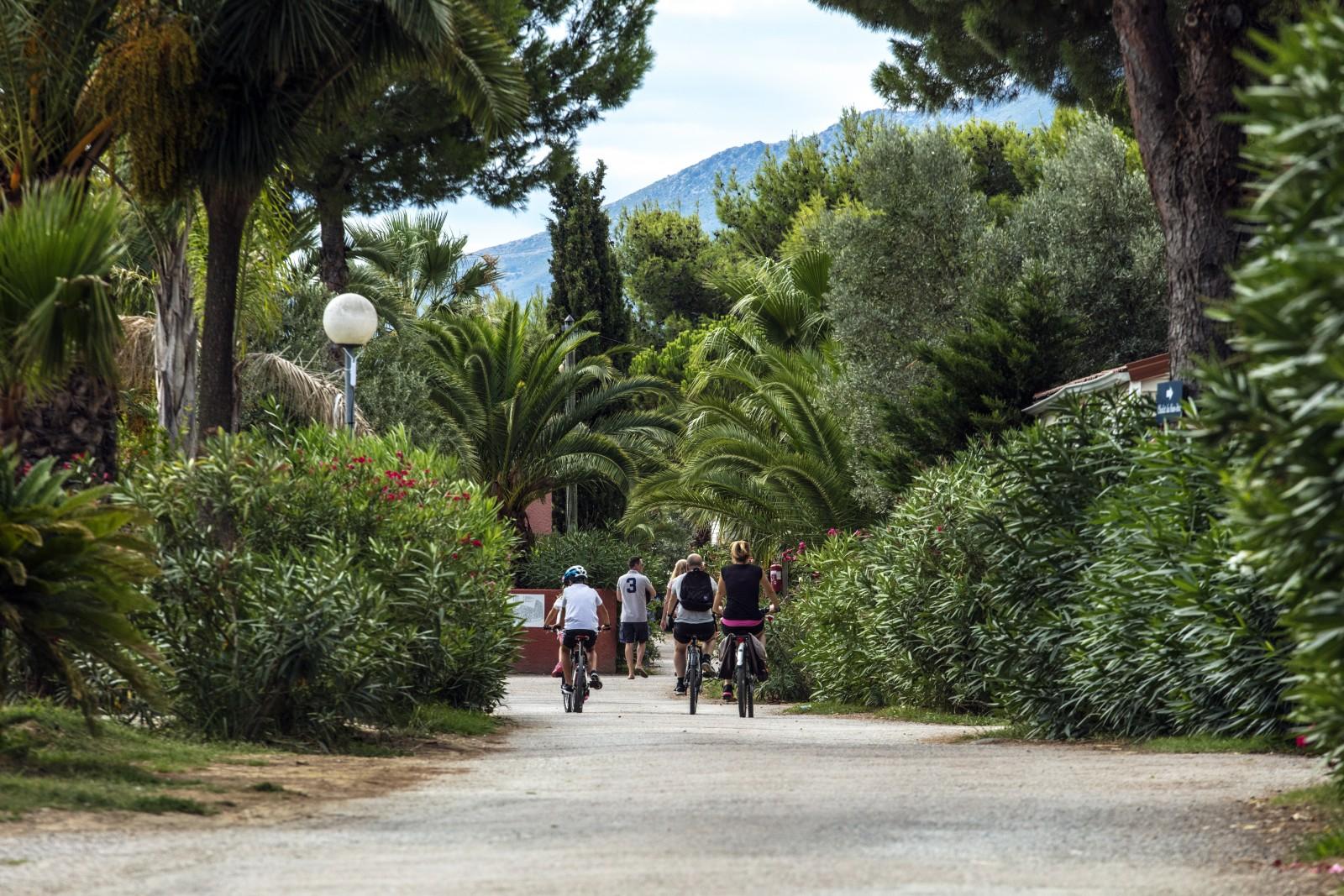 végétation méditerrannéene